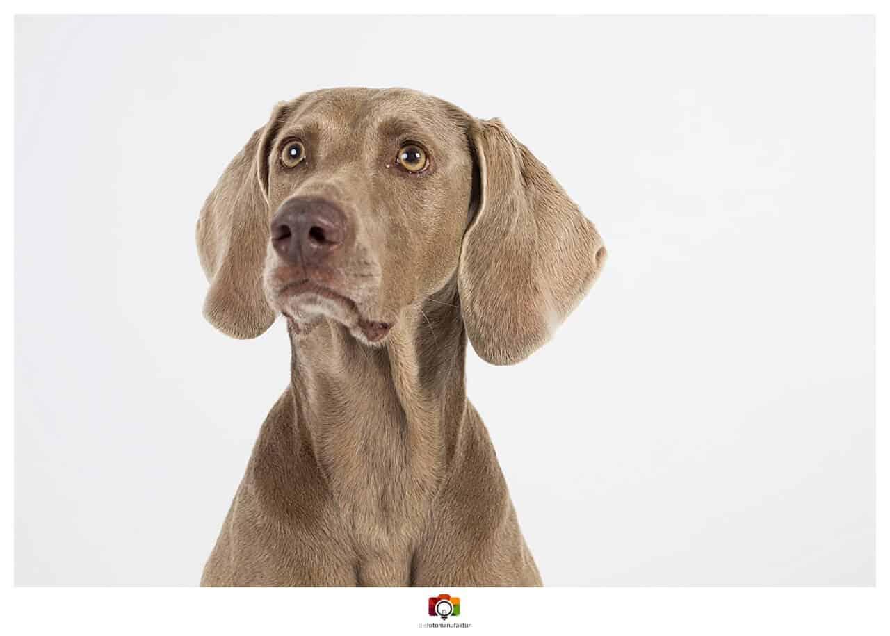Hundeshooting Im Fotostudio Gratis Fotoaktion Mit Hund