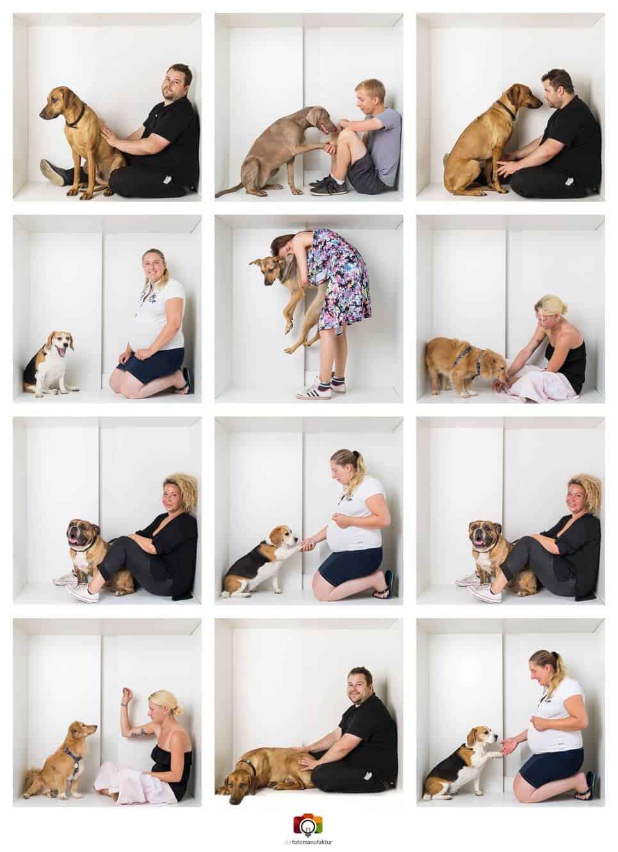 hundeshooting im fotostudio gratis fotoaktion mit hund diefotomanufaktur fotostudio winsen. Black Bedroom Furniture Sets. Home Design Ideas